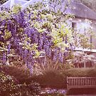 Wisteria Garden by yolanda
