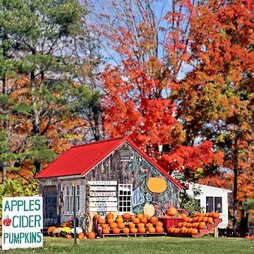 Apples Cider Pumpkins by djphoto