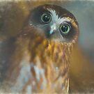 Boobook Owl by yolanda