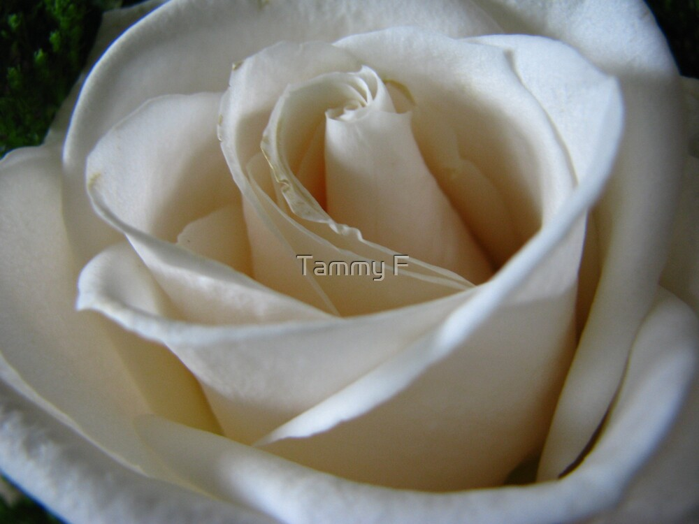 Purity by Tammy F