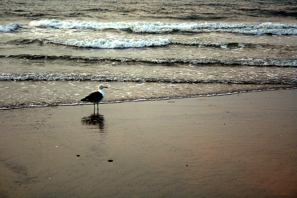 Seagull Wave by Charlie Briddes