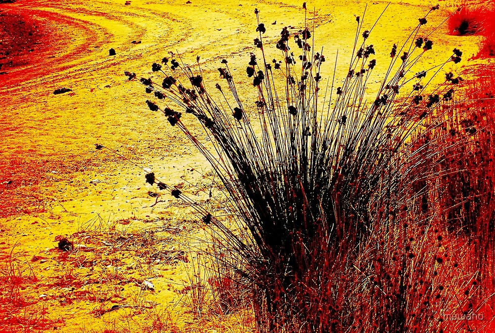 Grass Tussock by mawaho