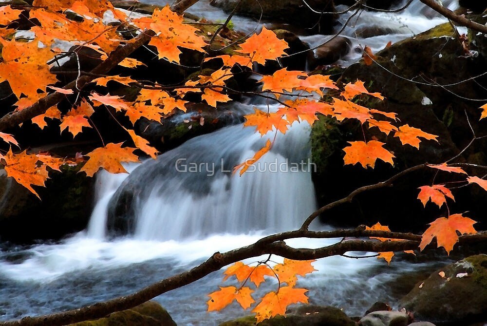 Mountain Splendor  by Gary L   Suddath