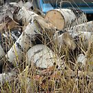 A Woodpile in Fall by Diane Petker