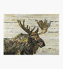 Eastern Moose Collage by C.E. White Photographic Print