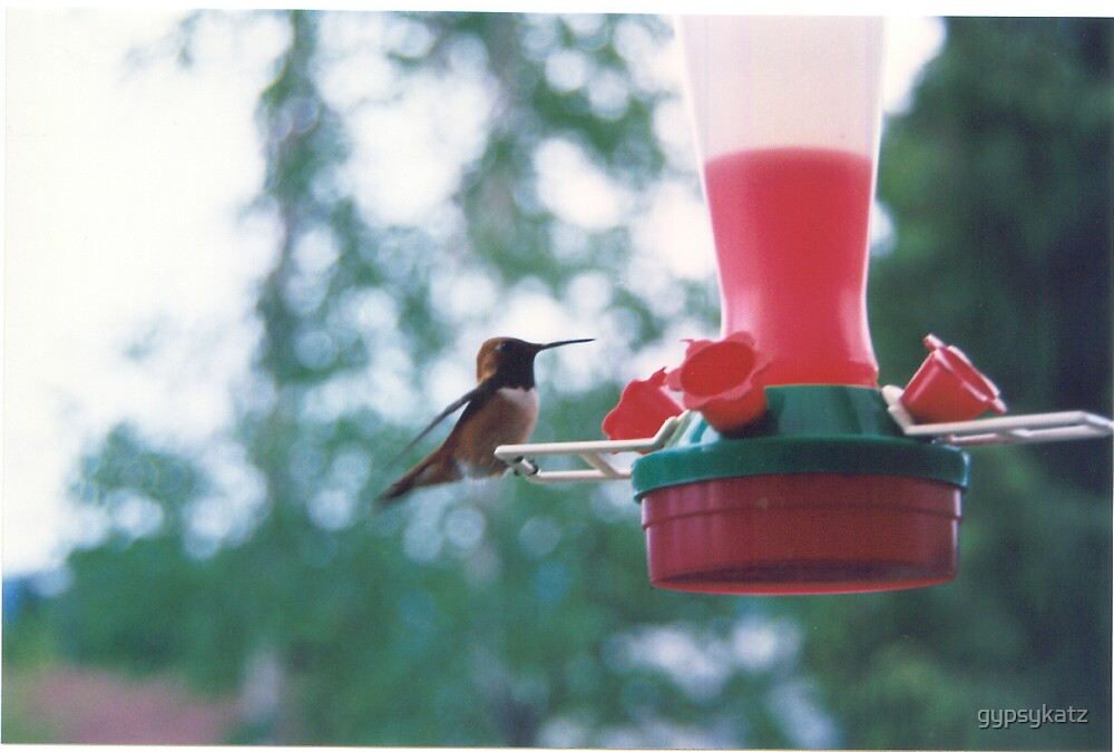 Hummingbird...Sicamous B.C. by gypsykatz
