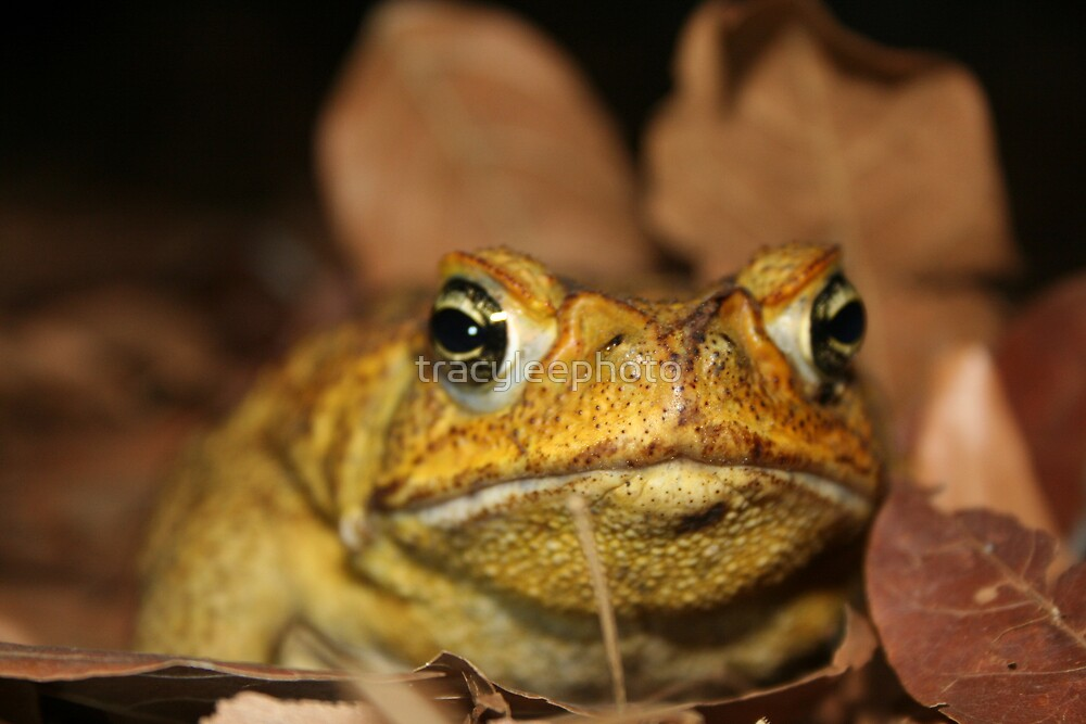 Toad  by tracyleephoto