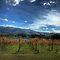 """September Avitar Challenge - """"your favourite vineyard scene"""""""