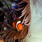 Where's Nemo? by tracyleephoto