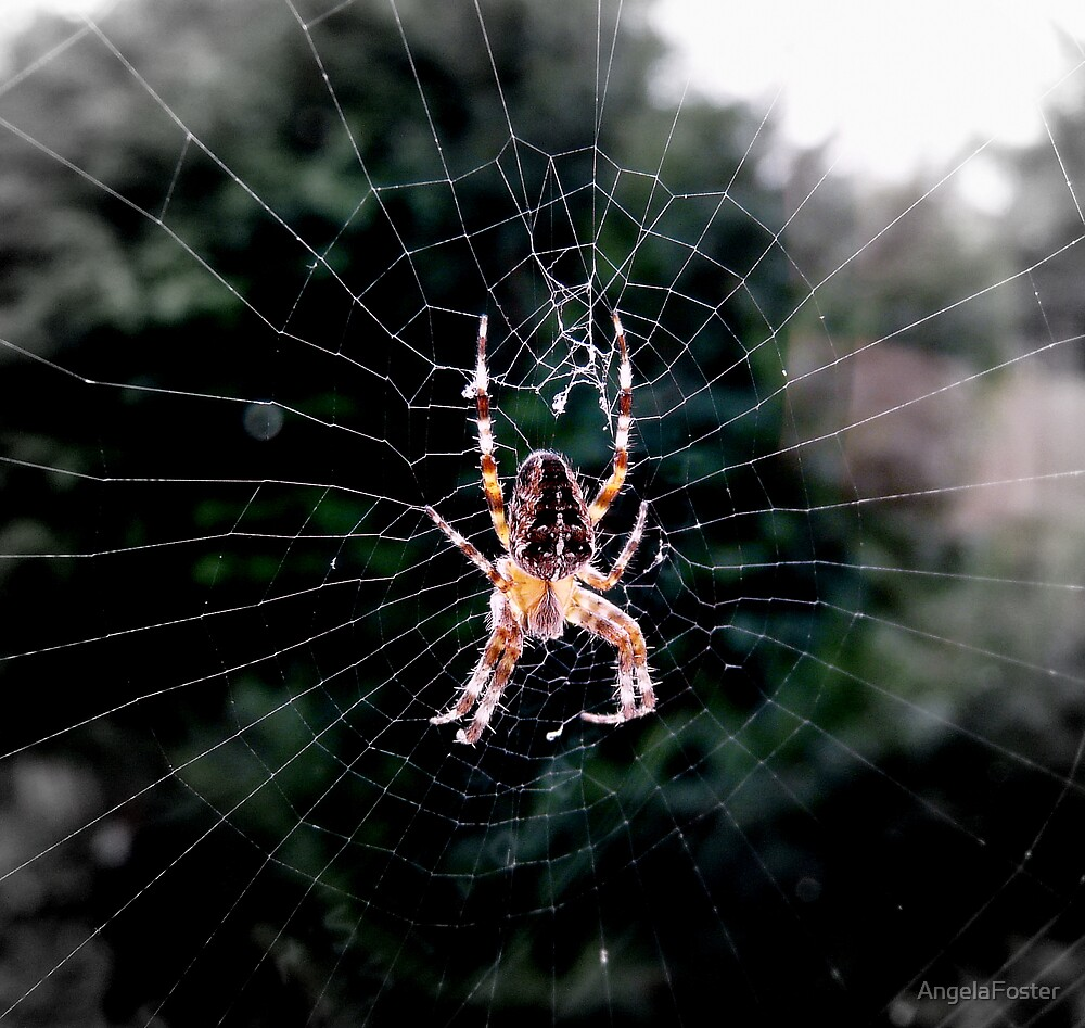 Spider by AngelaFoster