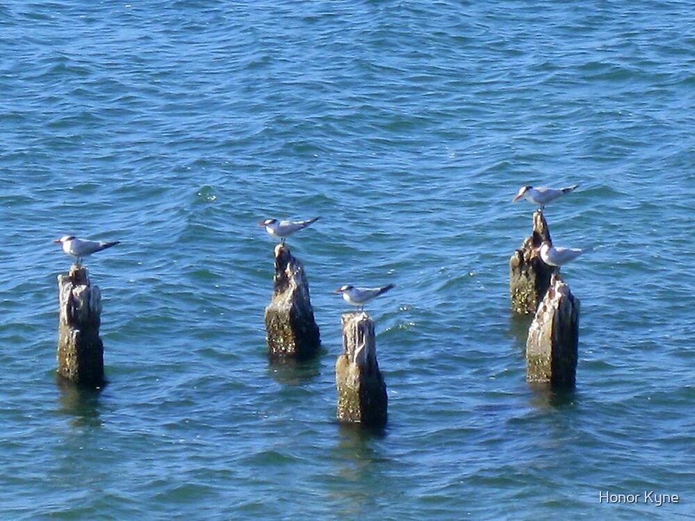 5 Sea Birds on 5 Logs by Honor Kyne