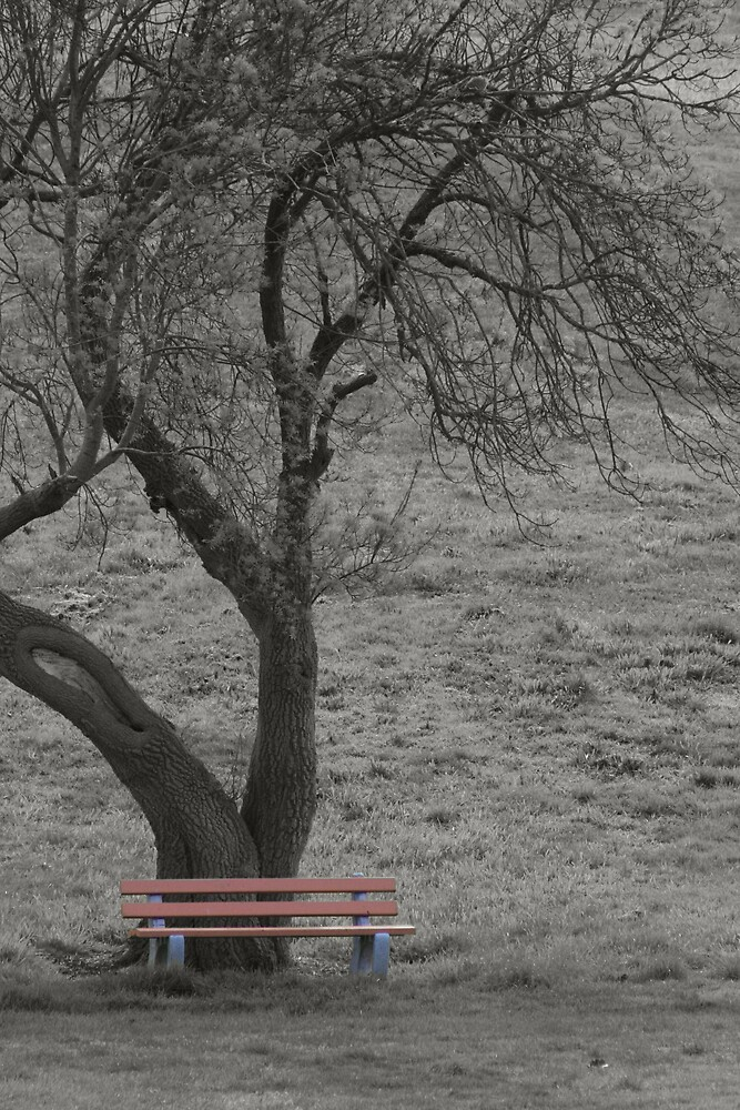 Mt Barker Bench by OzShell