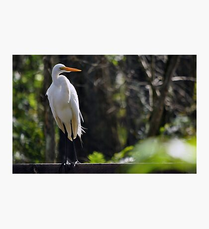 Hanging Out at Six Mile Cypress Photographic Print