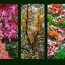Autumn Triptych  by Martina Fagan