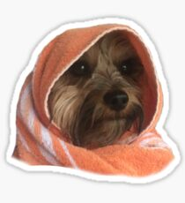 Murphy the Yorkie Sticker