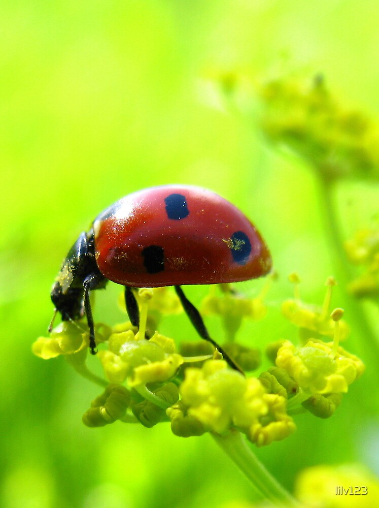 Ladybug by lilv123