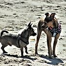 Taz with a friend on the beach by SANDRA BROWN