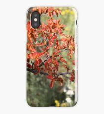 Farbenprächtiger Herbst in Patagonien iPhone Case/Skin