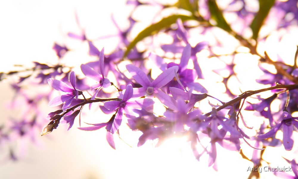 Purple Flowers by Andy Chadwick