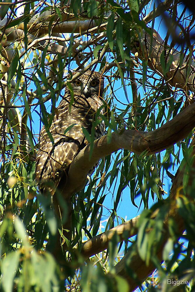 Powerful Owl Family 11 by Biggzie