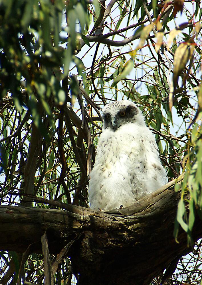 Powerful Owl Family 7 by Biggzie