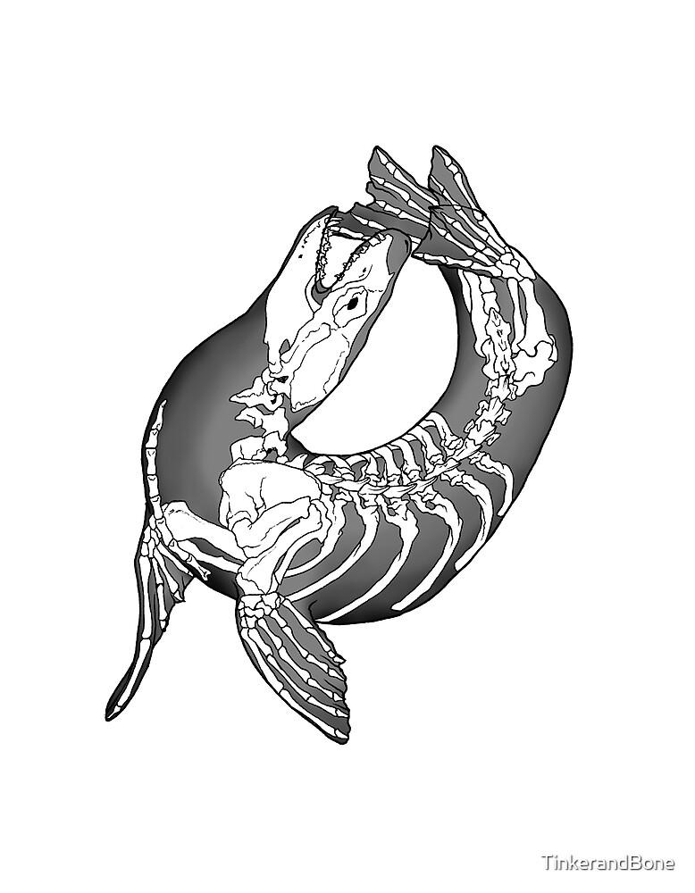 Leopard Seal Skeleton - Best Leopard 2017