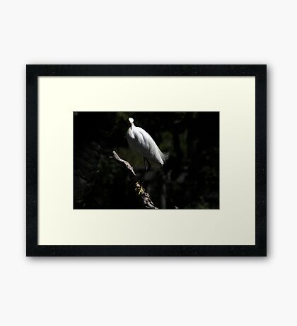 Fancy Feet Framed Print