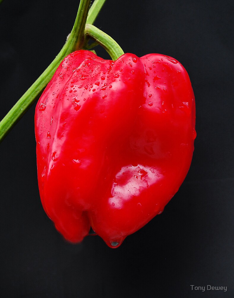 Red Pepper by Tony Dewey