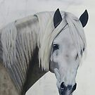 Andalusian Horse by evequineart