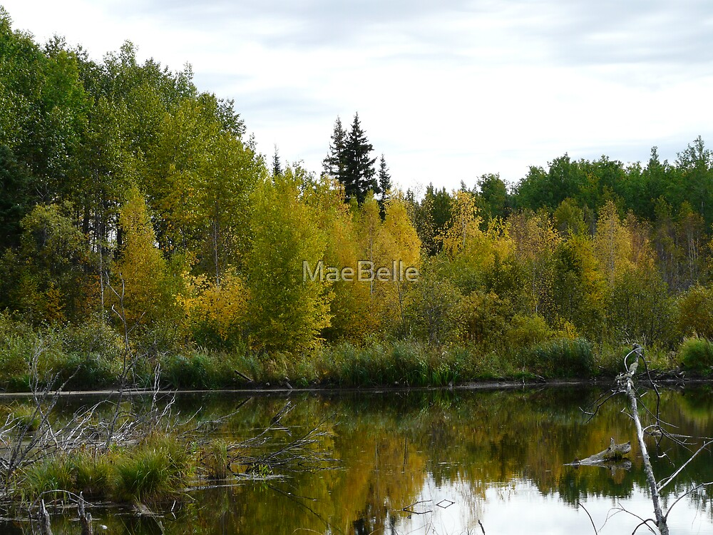 Beaver Pond in Autumn by MaeBelle