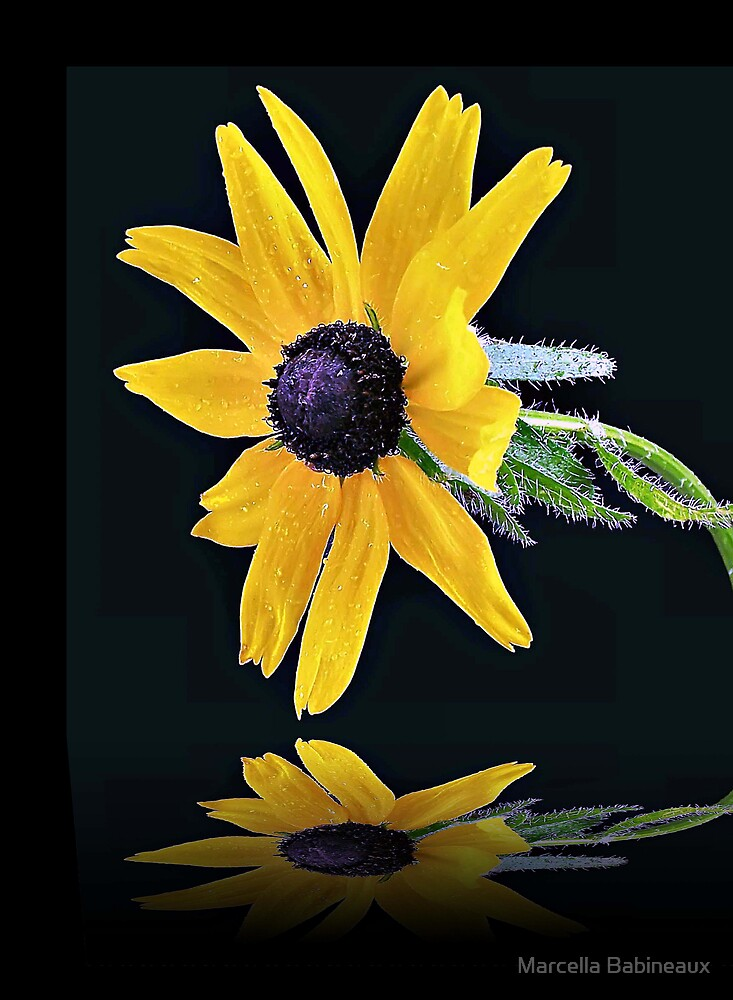 Black Eyed Susan by Marcella Babineaux