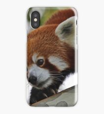Melbourne Zoo Red Panda iPhone Case/Skin