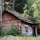 7.10.2017: Sauna's Autumn by Petri Volanen