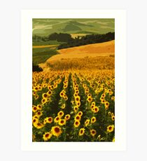 Sunflowers of Andalucia Art Print