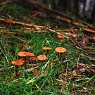 Fungi 12 by dougie1