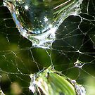 Web Drops by dougie1