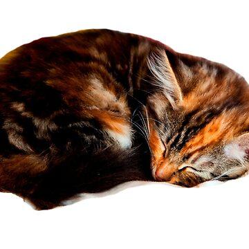 Sleeping Kitten by Dalyn