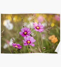 Wildflowers on a meadow Poster