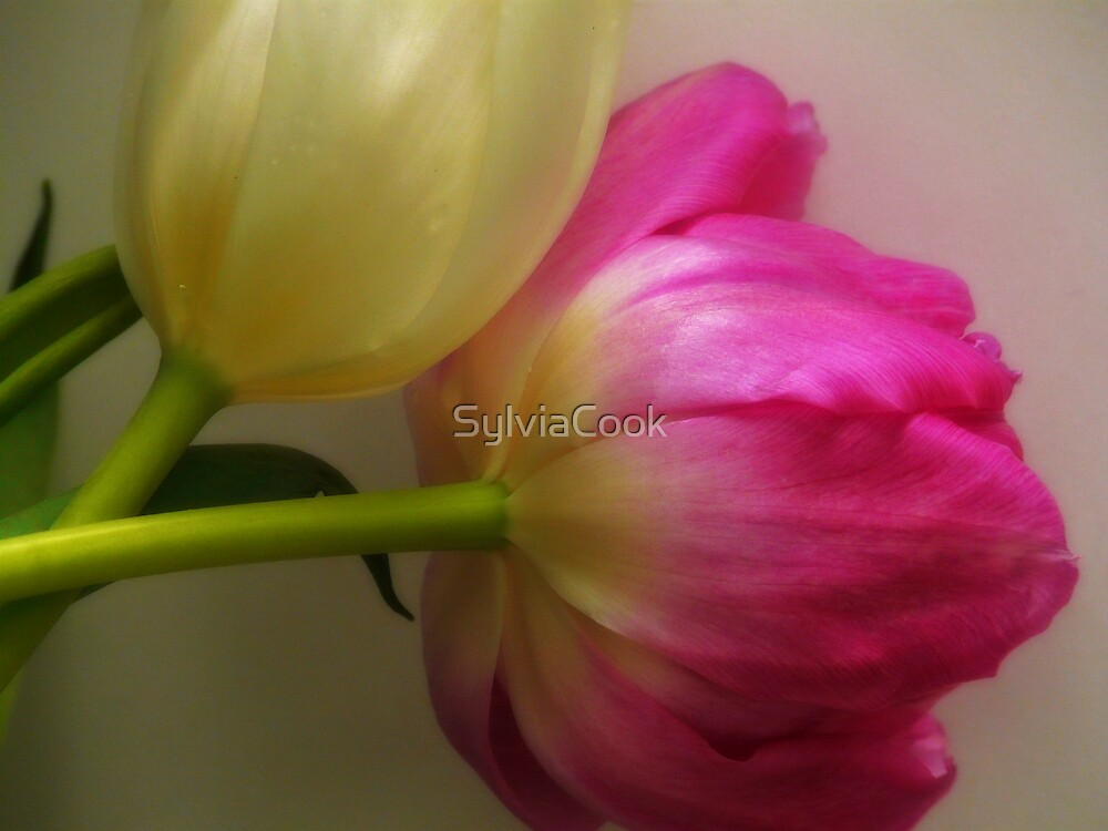 True Beauty by SylviaCook