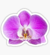 Moth orchid flower Sticker