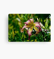 """Northwind Dancer"" Daylily Canvas Print"