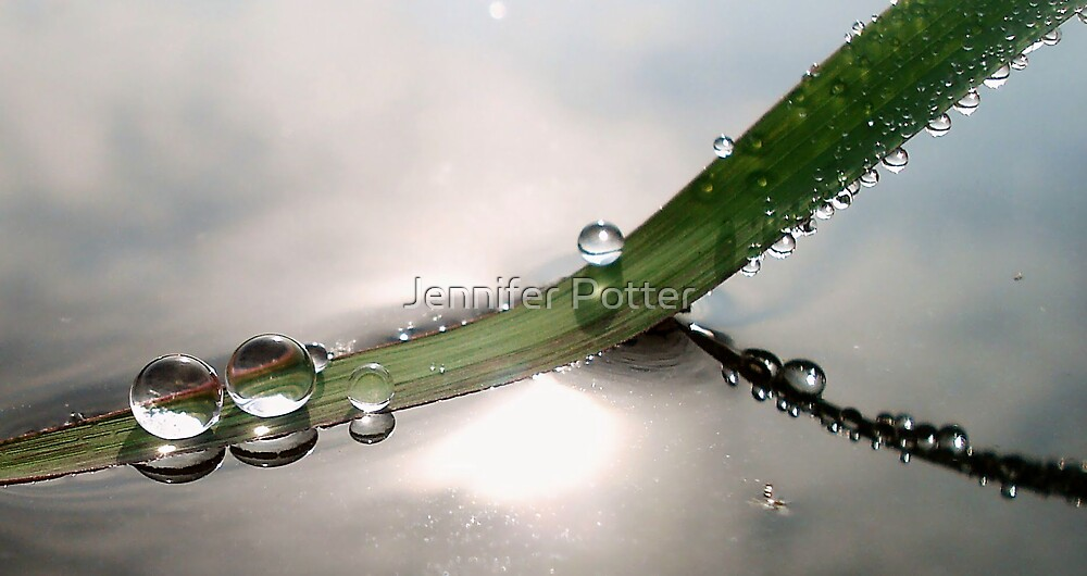 Illusion by Jennifer Potter