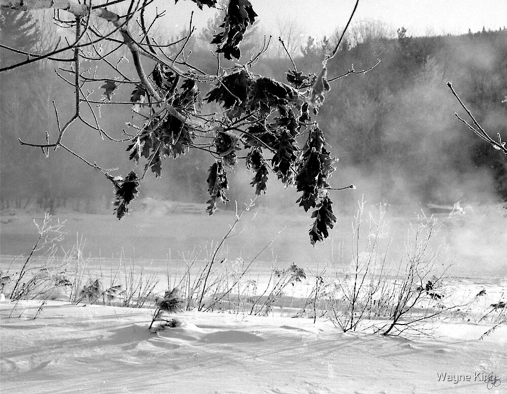 Oaks Along the Pemigewasset River by Wayne King