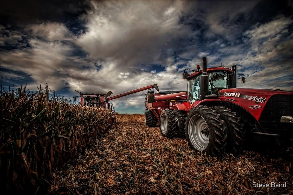 Pickin' Corn by Steve Baird