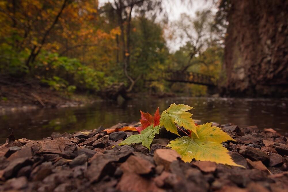 Fall leaves by Yvette  Schneider-Little