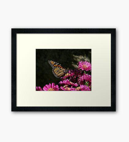 Happy Monarch Framed Print