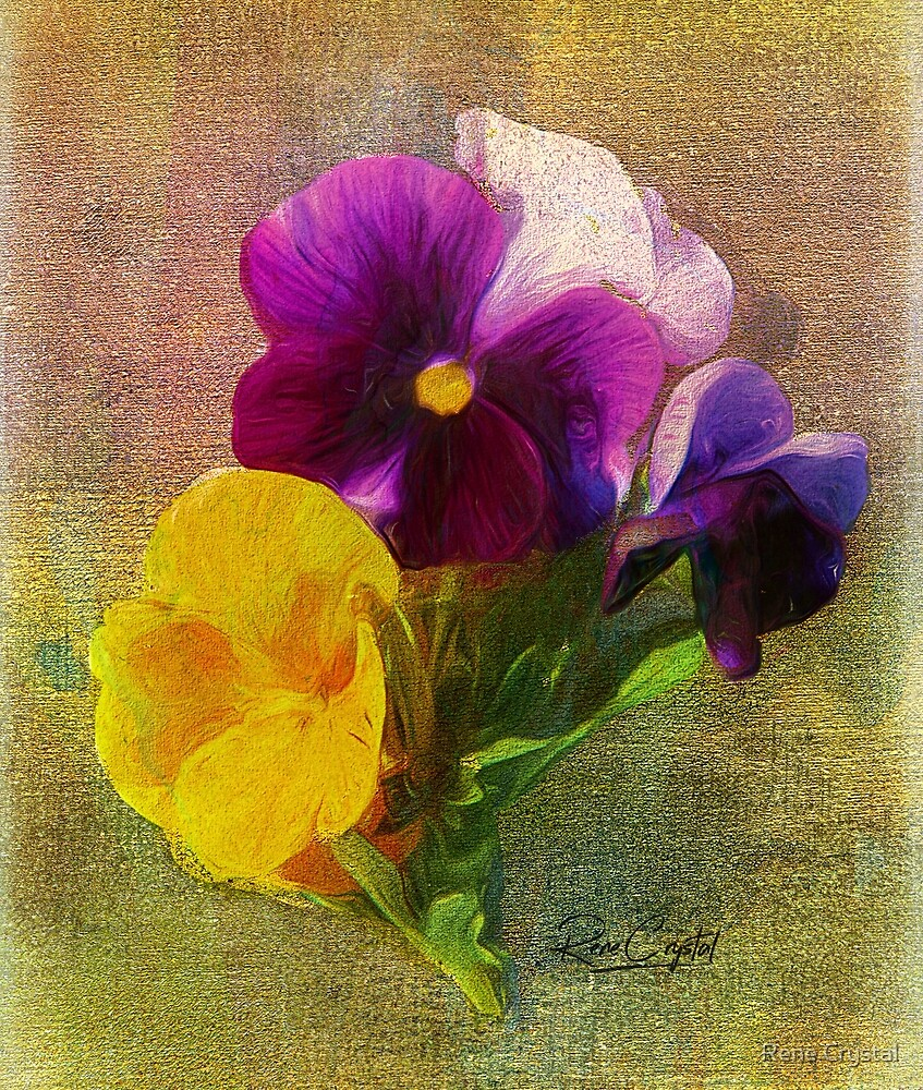 If You Believe in Pansies, Clap Your Hands by Rene Crystal