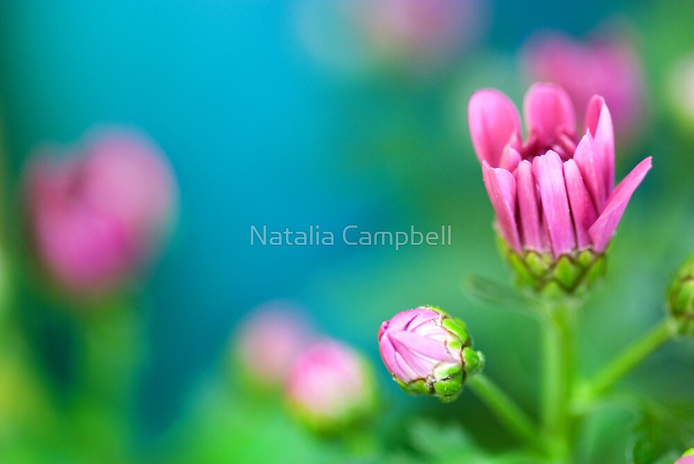 Life is a flower of which love is the honey  by Natalia Campbell