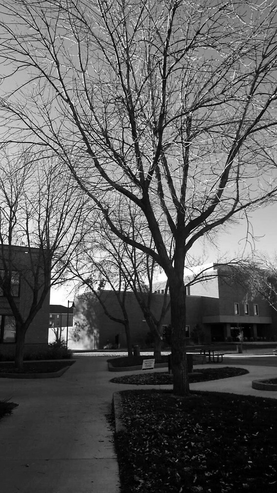 Trees in CMU by ceperalta