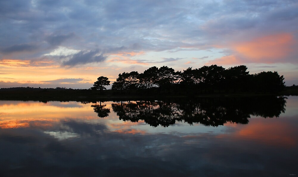 Sunset - Hatchet Pond, New Forest by Ursula Rodgers